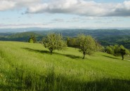 Izjemno zelena pokrajina